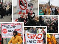 GMO - protesty 2013