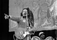 Vege reggae